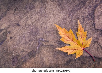 Single yellow maple autumn leaf on granite stone ground texture background