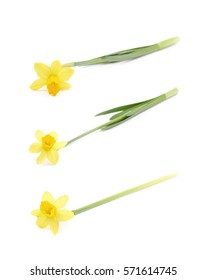 Single yellow narcissus flower lying on its side, composition isolated over the white background, set of three different foreshortenings