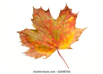 Single yellow and red autumn leaf on white, isolating background