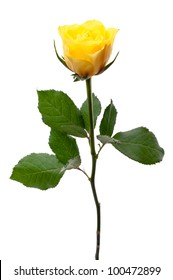 Single yellow rose, isolated on a white background