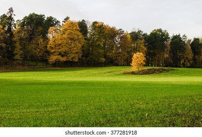 Single yellow tree and grass meadow with colorful trees in Autumn at Oslo park, Norway