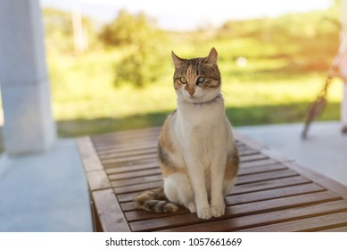 single young cat, wait and sit on a table in the outdoor