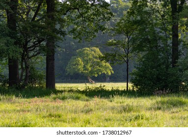 Singled out tree in forest field