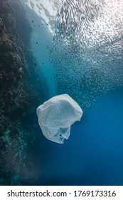 Single-use plastic and school of fish in a shallow reef.