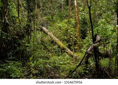 Sinharaja Forest Reserve in Sri Lanka Jungle greens danger