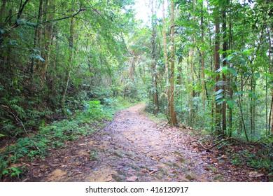 Sinharaja Forest Reserve in Sri Lanka