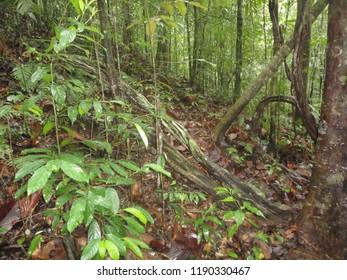 Sinharaja forest sri lanka
