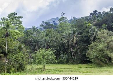 Sinharaja rain Forest, nature Reserve, Sri Lanka