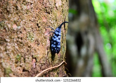 sinharaja rain forest sri lanka tree animals