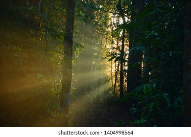 sinharaja rainforest sunrise, morning sun