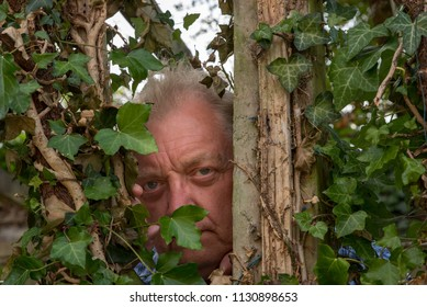 Sinister Caucasian mature  male looking  through a gap in some ivy