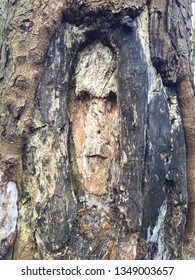 Sinister face carved into old tree trunk