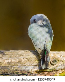 Sinister looking small red bellied parrot hiding behind its wing