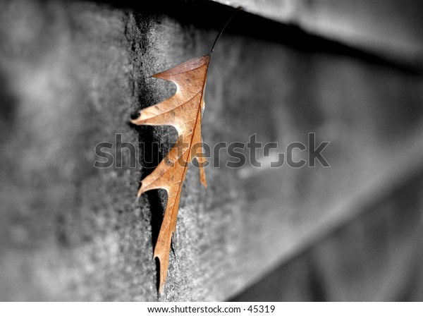 A sinlge leaf on a shed.