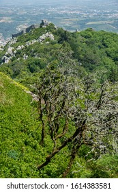 Sintra, Portugal - May 23, 2017: Forest landscape with the castle of the Moors in the background, seen from the Pena Palace