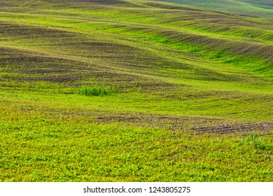 Sinuous hills in tuscany countryside Italy