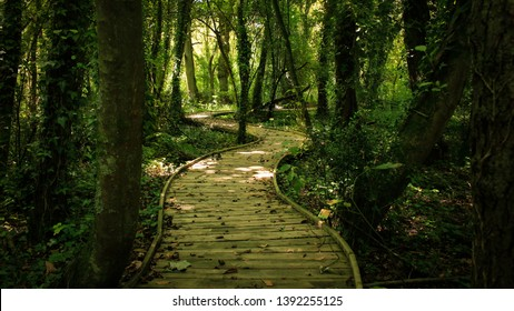 Sinuous path trough the forest with soft light. Find your way. Asturias, Spain.