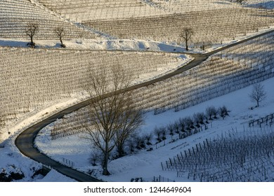 Sinuous road among snow covered vineyards in winter, Barbaresco, Langhe, Piedmont, Italy