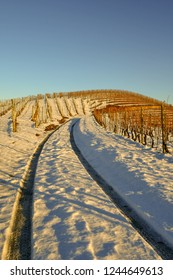 Sinuous road among snowy vineyards with blue sky in winter, Barbaresco, Langhe, Piedmont, Italy