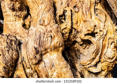 Sinuous tree trunk background