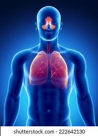 Sinuses and lungs issue