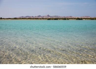 Sir Bani Yas island in the UAE