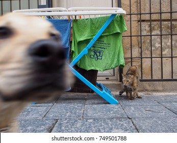 Siracusa, Italy - October 11: Dog photobombs photo of scared cat on October 11, 2014 in Siracusa, Italy