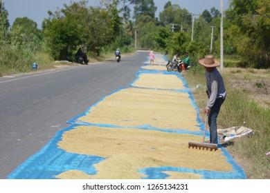 SISAKET THAILAND-November 2 :  Farmer working on November 2, 2018  Farmer drying rice spirit of Phusing Sisaket Thailand . - Image