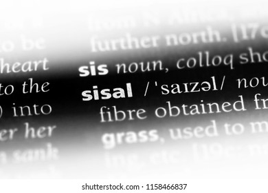 sisal word in a dictionary. sisal concept.