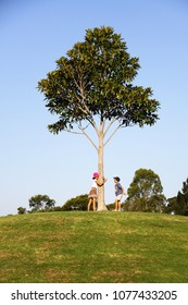 Sister and brother playing around a tree up on the hill
