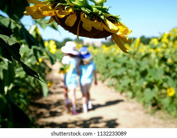 Sisters forever at a sunflower field at Dorothea Dix Park in Raleigh North Carolina