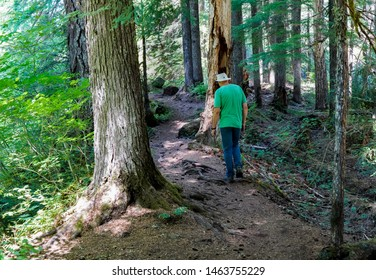 Sisters, Oregon - 7/20/2019: A man hiking on the McKenzie river trail in a pine tree forest near McKenzie River, Oregon