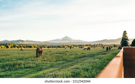 Sisters, Oregon / USA - June 15 2019: Looking out over the field of horses towards Mount Washington from Black Butte Ranch in Sisters, Oregon.