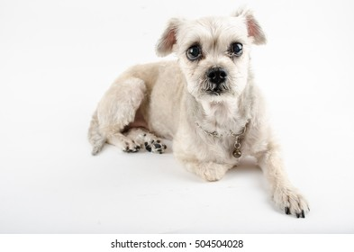 Sit Puppy on the white paper.