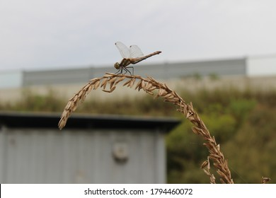 sitdown on the fall - dragonfly in fall