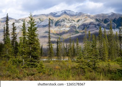 Site of forest fire, Kootenay National Park, Canadian Rockies, British Columbia, Canada