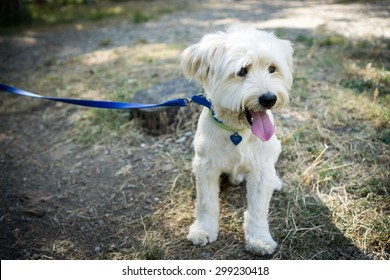 Sitted dog with leash