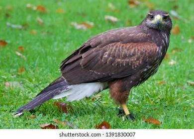 Sitting bird of grey in the grass