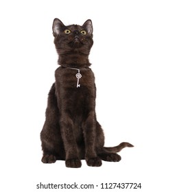 Sitting black kitten wearing silver pendant looking up to the copy space area