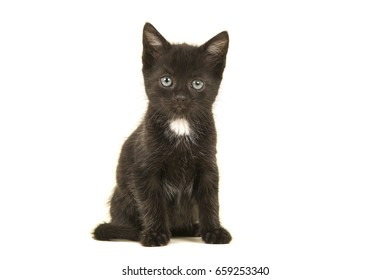 Sitting black with white chest kitten looking at the camera isolated on a white background