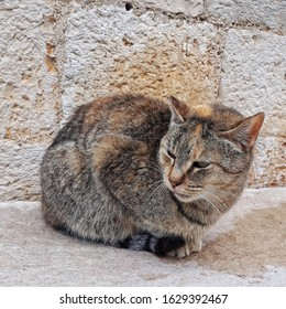 Sitting  brown cat outside on brick background. - Shutterstock ID 1629392467