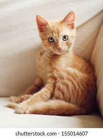 Sitting cute ginger kitten with direct eye contact
