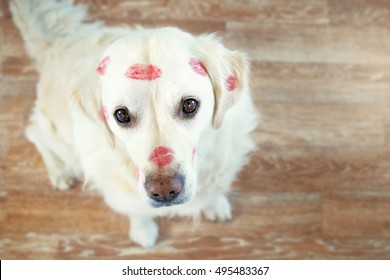 Sitting dog looks upwards and has many lipstick kisses in the face