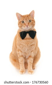Sitting ginger cat with a black bow tie, isolated on a white background