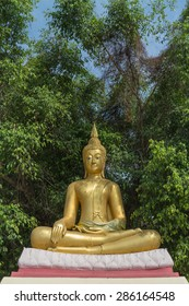 the sitting gold buddha statue  with the tree background