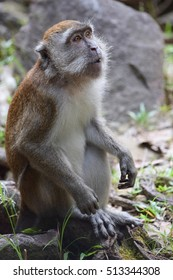 sitting monkey is looking, studying, surprised