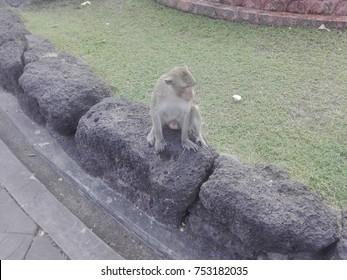 The sitting monkeys on the stone.
