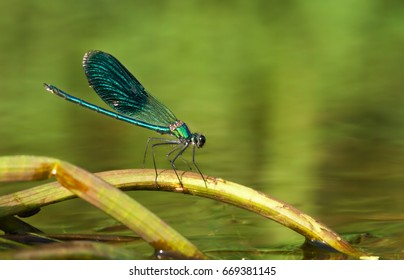 Sitting on a stick out of the water dragon through which the wings reflect the flares reflected from the water sun