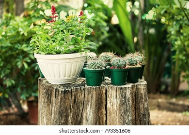 sitting on a tree stump in the garden few mini cactus pots