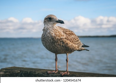 Sitting seagull with sea in the background